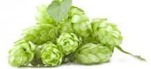 beer raw materials